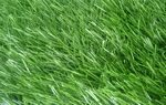 Label-2_grass