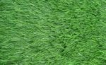 Label-4_grass
